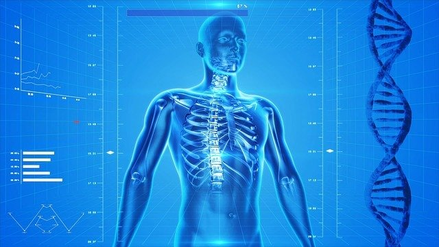 Vücudumuzun Kusursuz Düzeni Nasıl Çalışır?