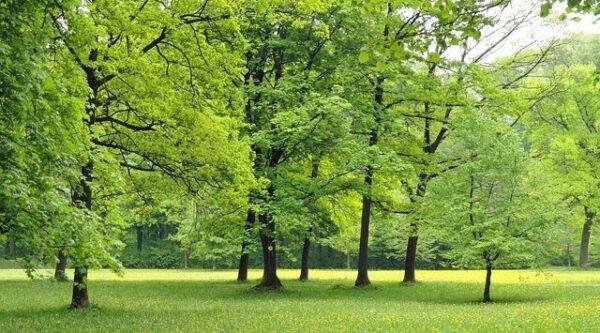 Yeşil Rengin Büyüsü