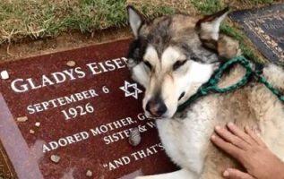 Kalbi kırılan köpek, sahibinin mezar taşında 'ağlarken' nefesini tutamıyor